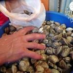 Los mariscos deliciosos del Mercado Mayoreo