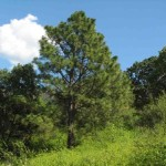 ¡La Reforestación Urbana en el Centro Comienza este 29!