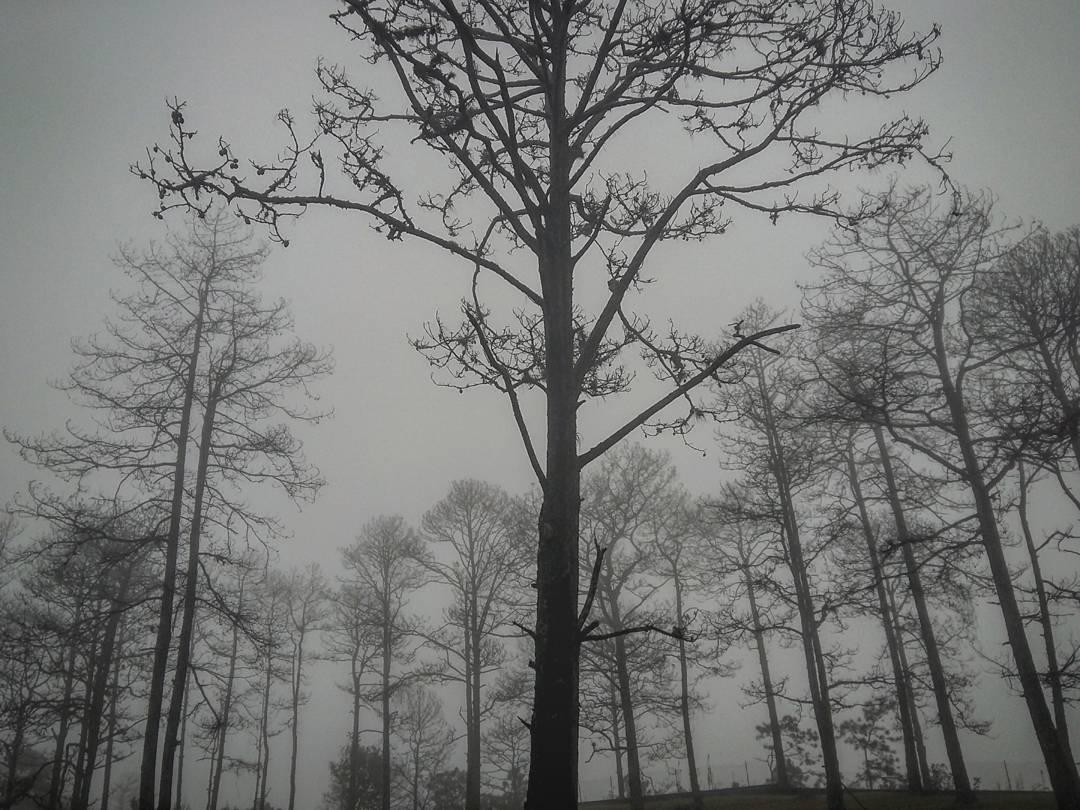 Tarde con neblinas en el Cerro el Picacho - Foto de Evangelia Dicoulis